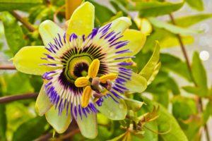 flower-3548665_1920